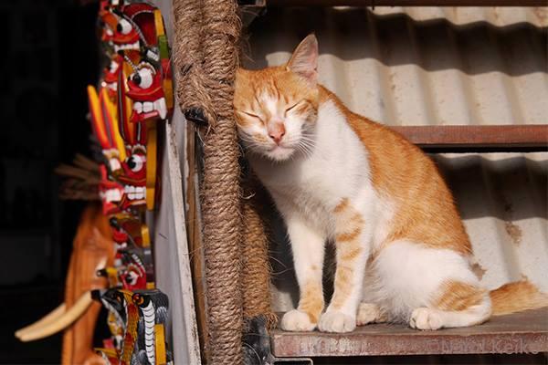 土産物屋の猫が「いっしょにお昼寝しようよぉ by新美敬子