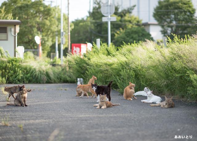 写真家あおいとり_ここは猫島じゃないよ2