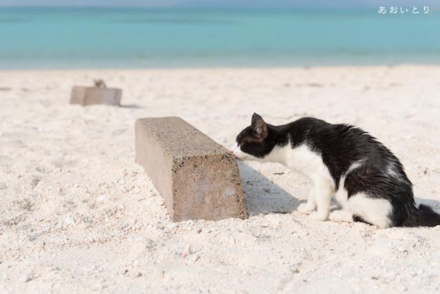 写真家あおいとり_思い思いのビーチ2