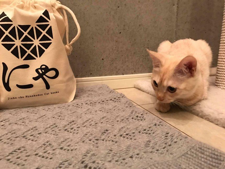 2代目猫店長の初仕事2
