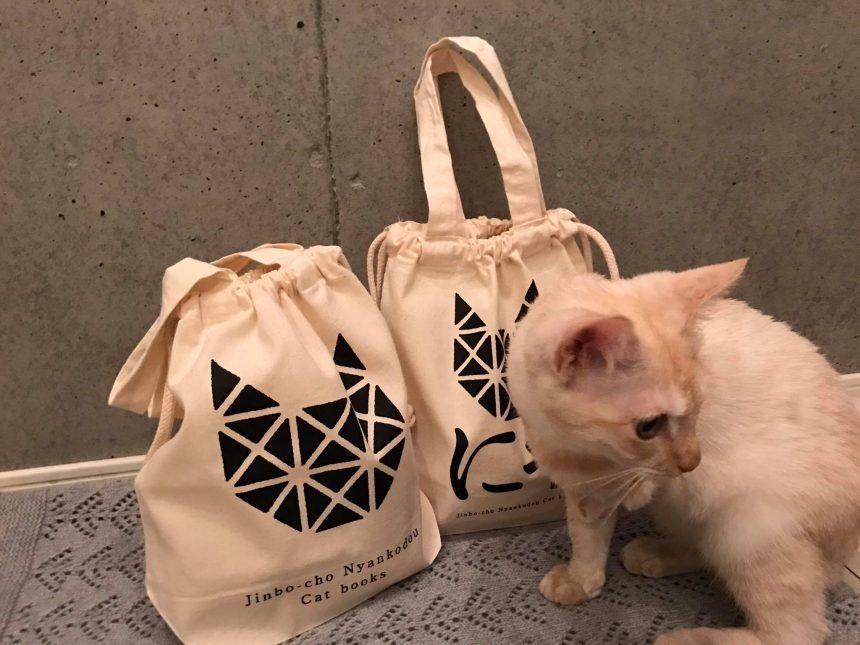 2代目猫店長の初仕事4