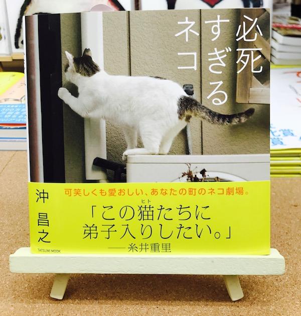 写真集『必死すぎるネコ』