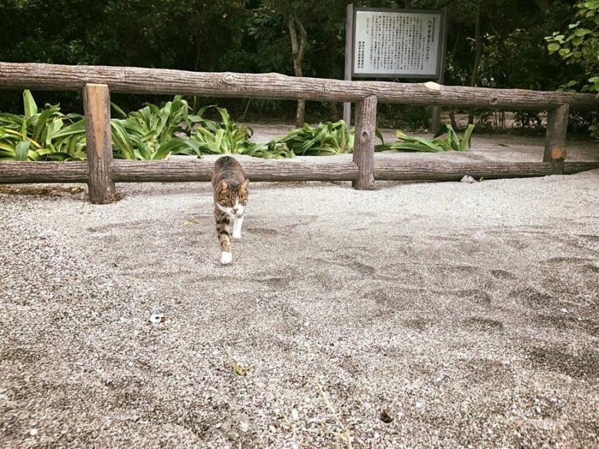 マリーナの猫とプリン1