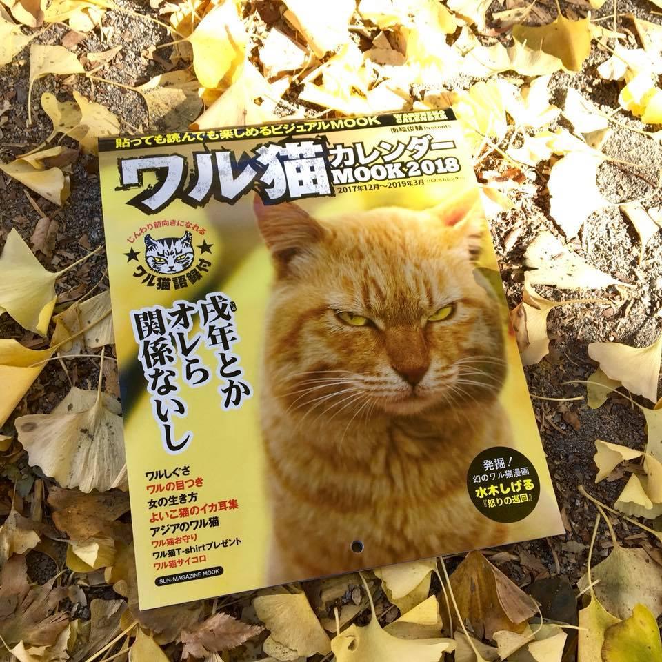 ワル猫カレンダーmook2018年版の全貌を公開1