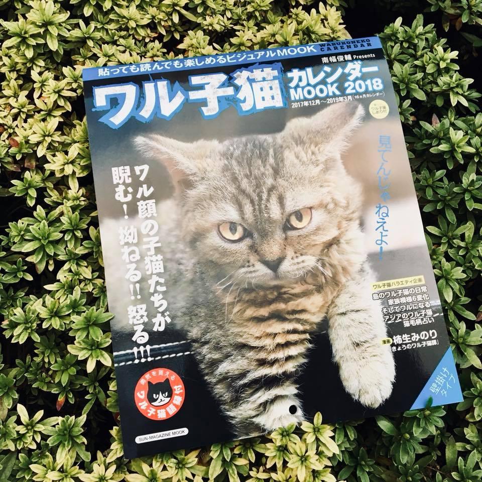 『ワル子猫カレンダーmook2018年版』全貌を公開!1