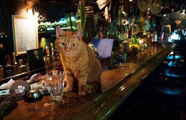 写真家MARCO_猫のいるBAR1