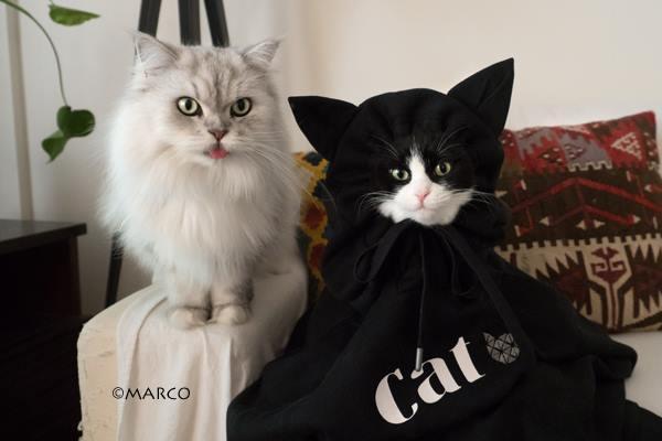 写真家MARCO_猫耳パーカー1