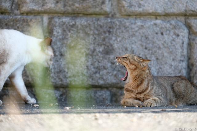 写真家あおいとり_浜の猫の昼下がり1