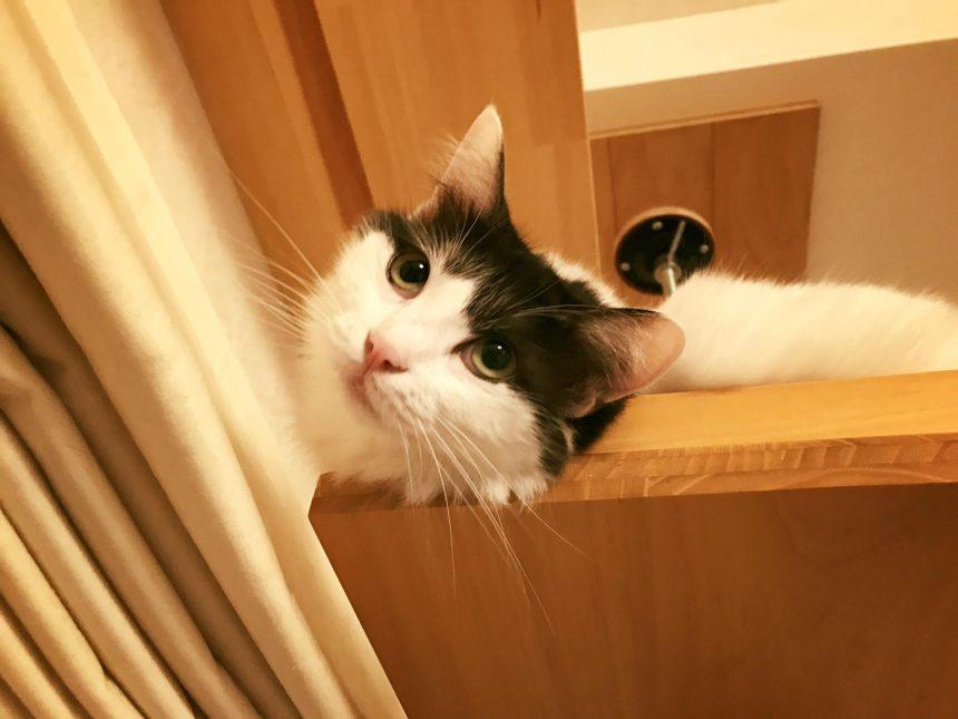 香取家の猫々1