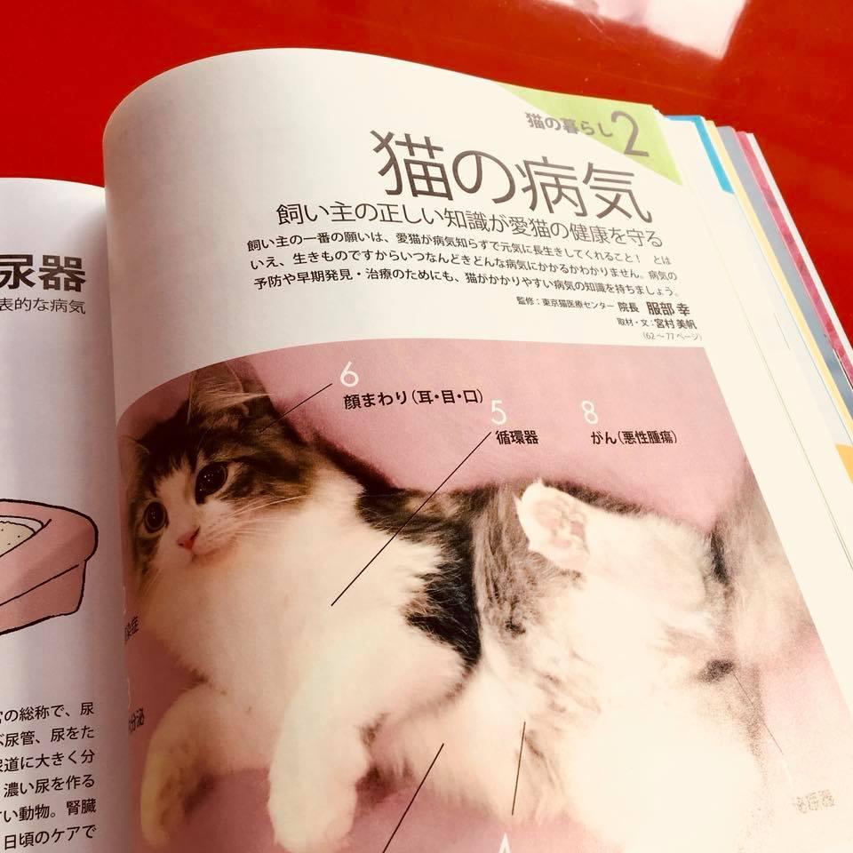 『ねこ検定公式ガイドBOOK』紹介10