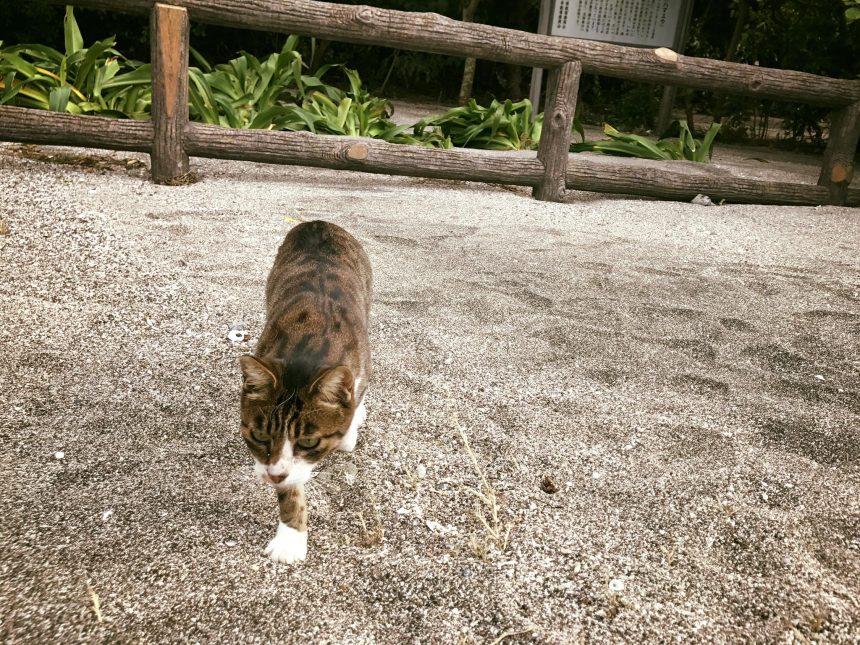 マリーナの猫とプリン2