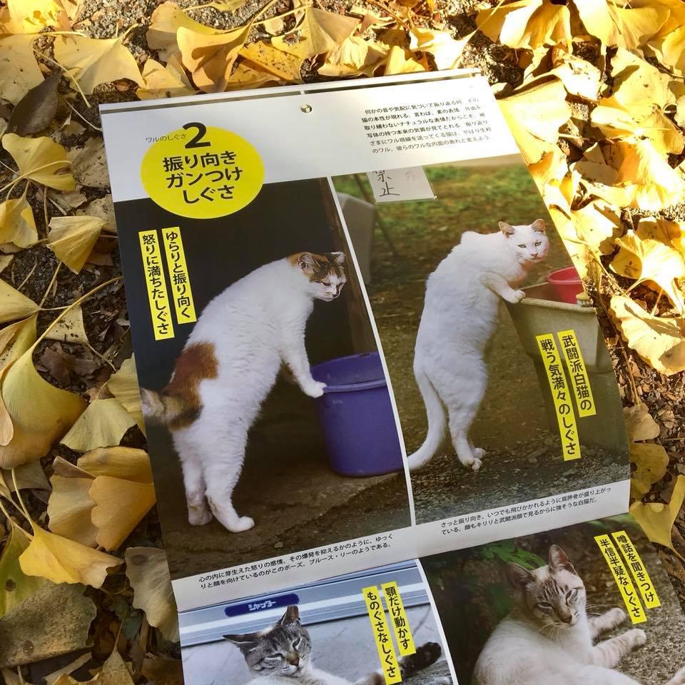 ワル猫カレンダーmook2018年版の全貌を公開2