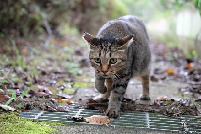 写真家あおいとり_歩く猫たち2