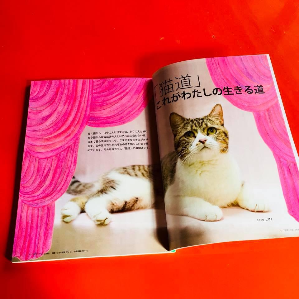 『ねこ検定公式ガイドBOOK』紹介2