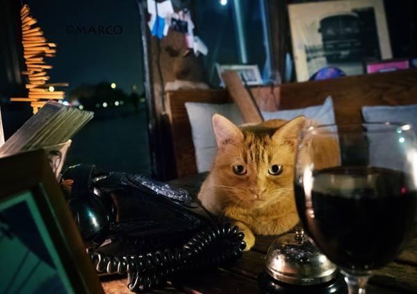 写真家MARCO_猫のいるBAR2
