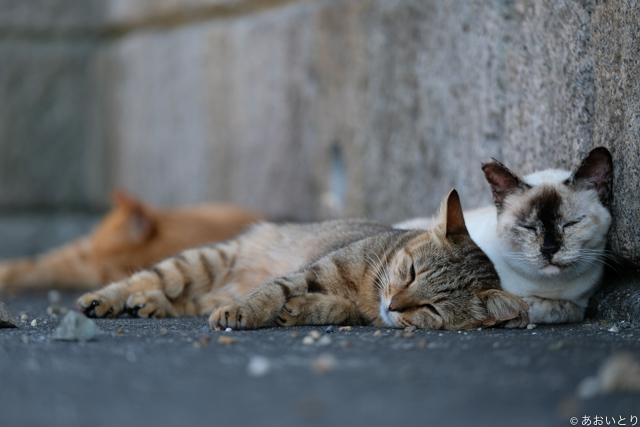 写真家あおいとり_浜の猫の昼下がり2