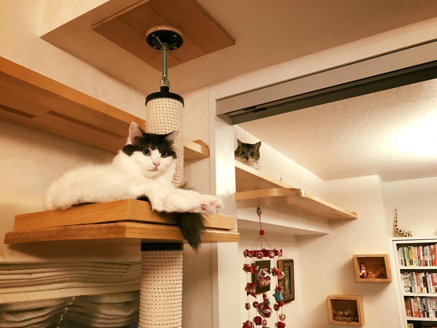 香取家の猫々2