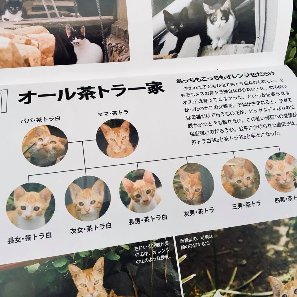 『ワル子猫カレンダーmook2018年版』全貌を公開!3