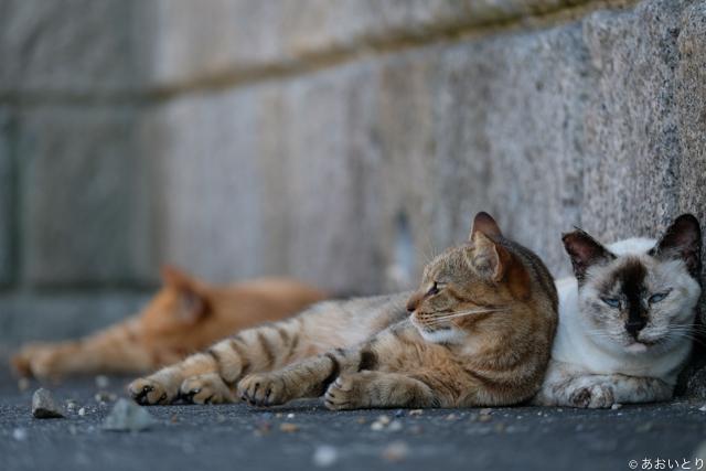 写真家あおいとり_浜の猫の昼下がり3