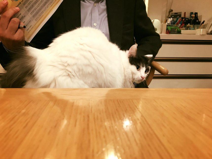 香取家の猫々6