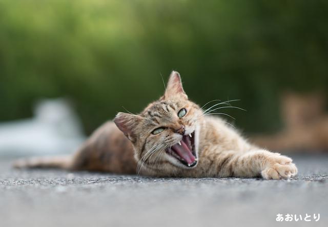 写真家あおいとり_完全に僕を見下してる猫3