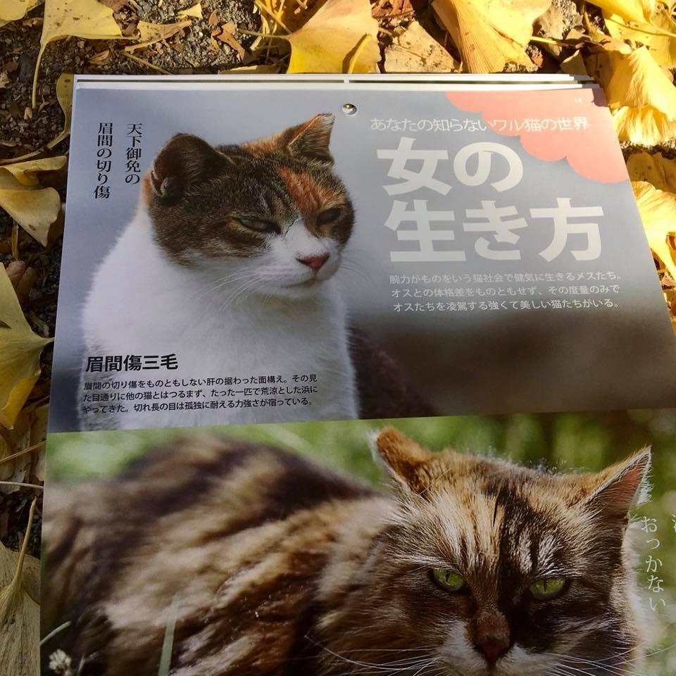 ワル猫カレンダーmook2018年版の全貌を公開3