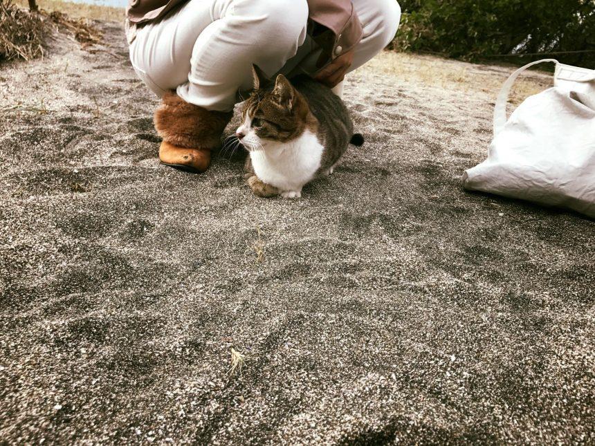 マリーナの猫とプリン3