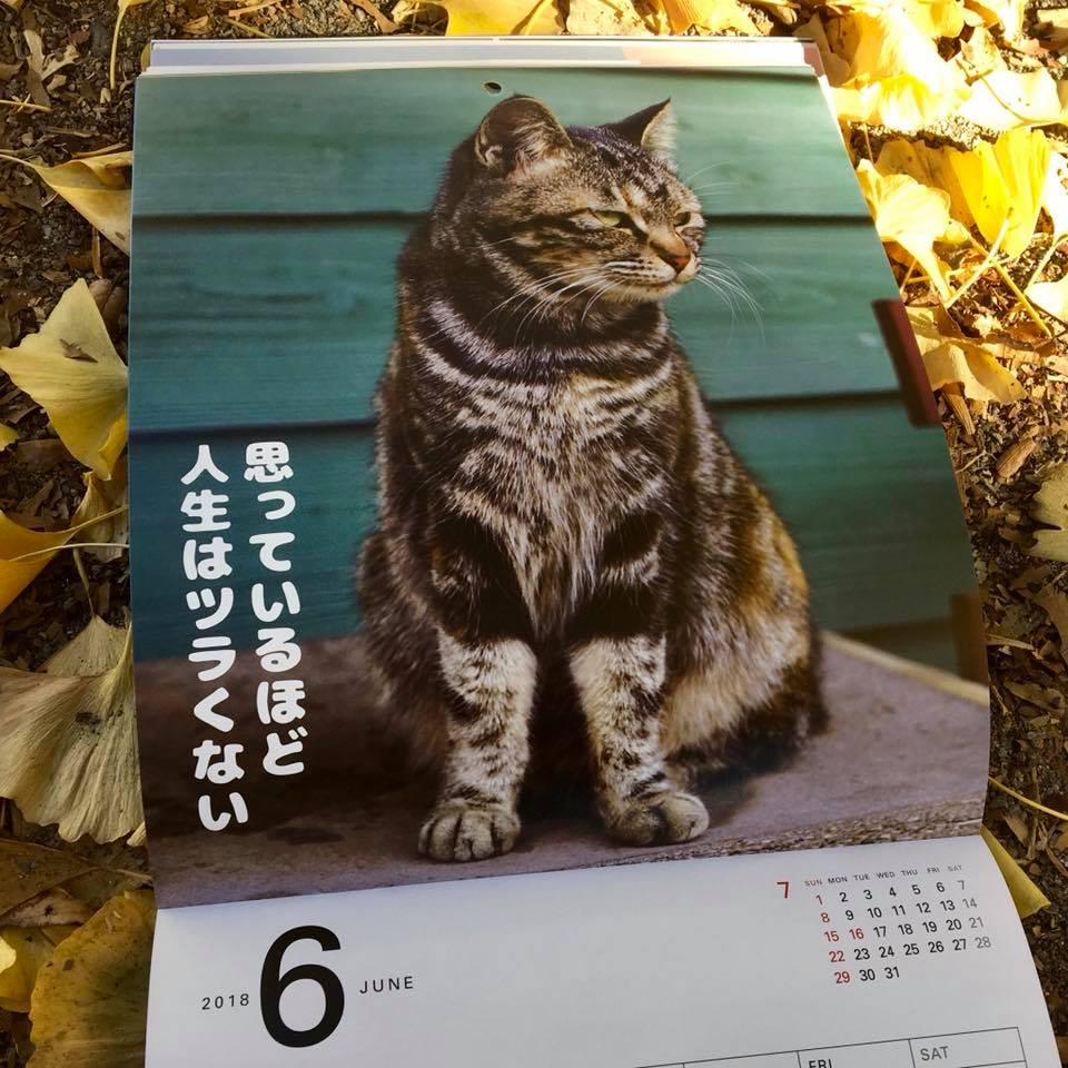 ワル猫カレンダーmook2018年版の全貌を公開4