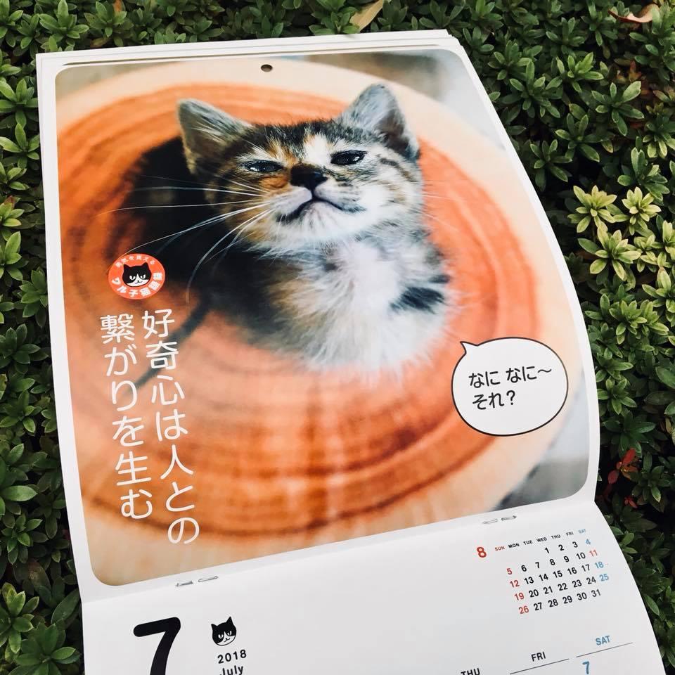 『ワル子猫カレンダーmook2018年版』全貌を公開!4