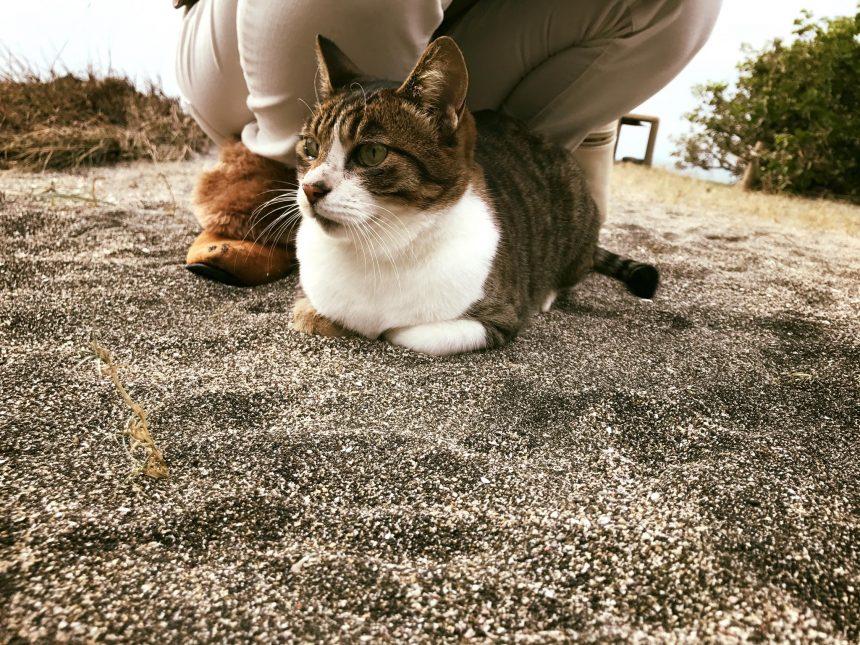 マリーナの猫とプリン4