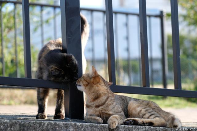 写真家あおいとり_浜の猫の昼下がり5
