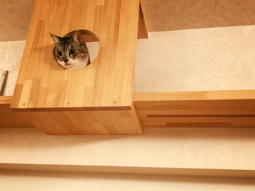 香取家の猫々3