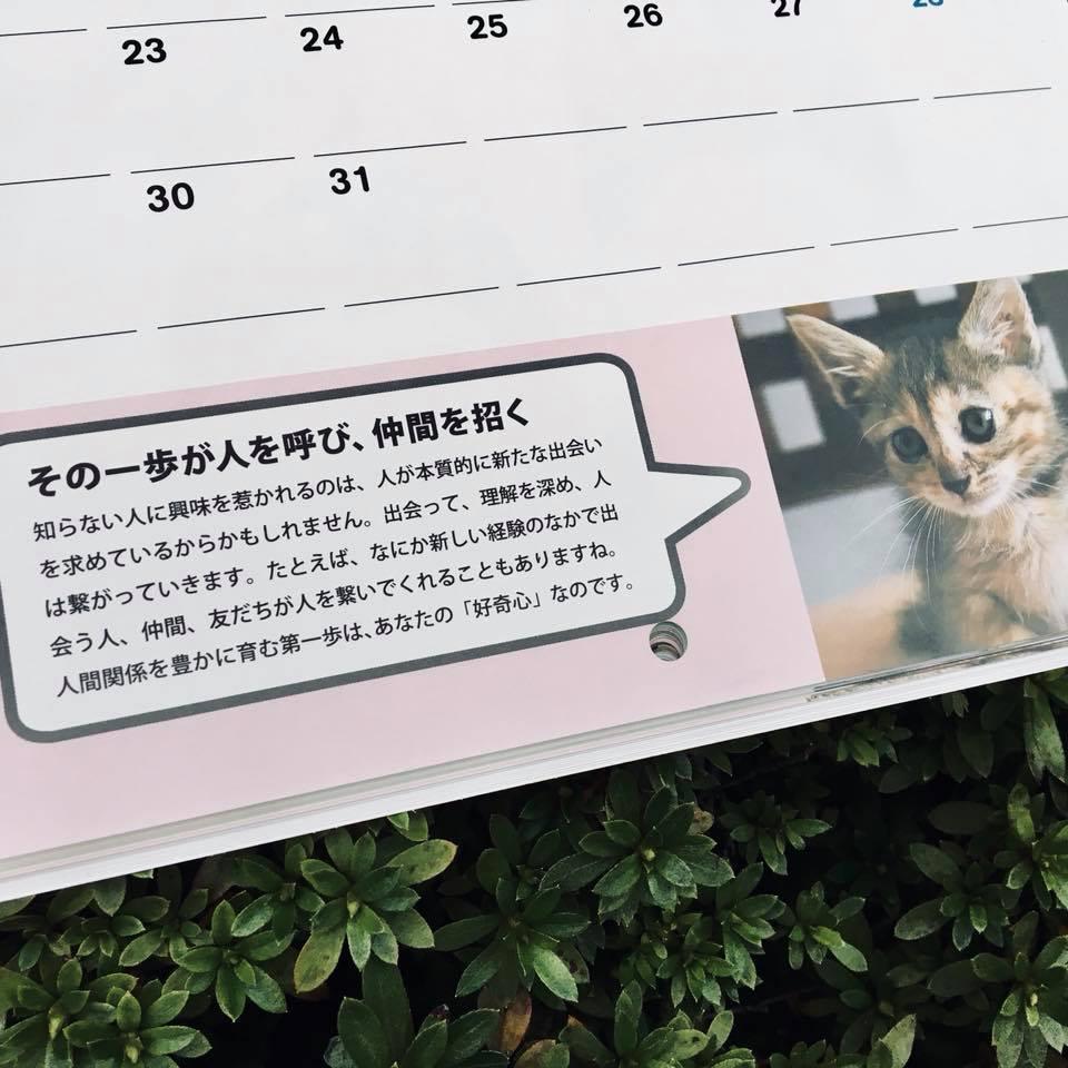 『ワル子猫カレンダーmook2018年版』全貌を公開!5
