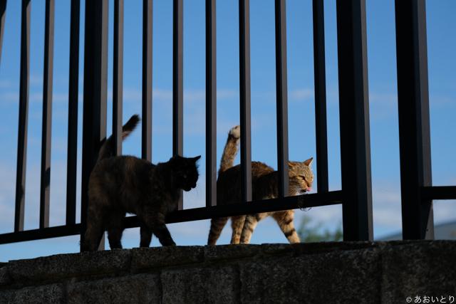 写真家あおいとり_浜の猫の昼下がり6