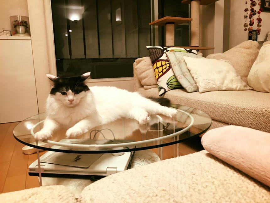 香取家の猫々8
