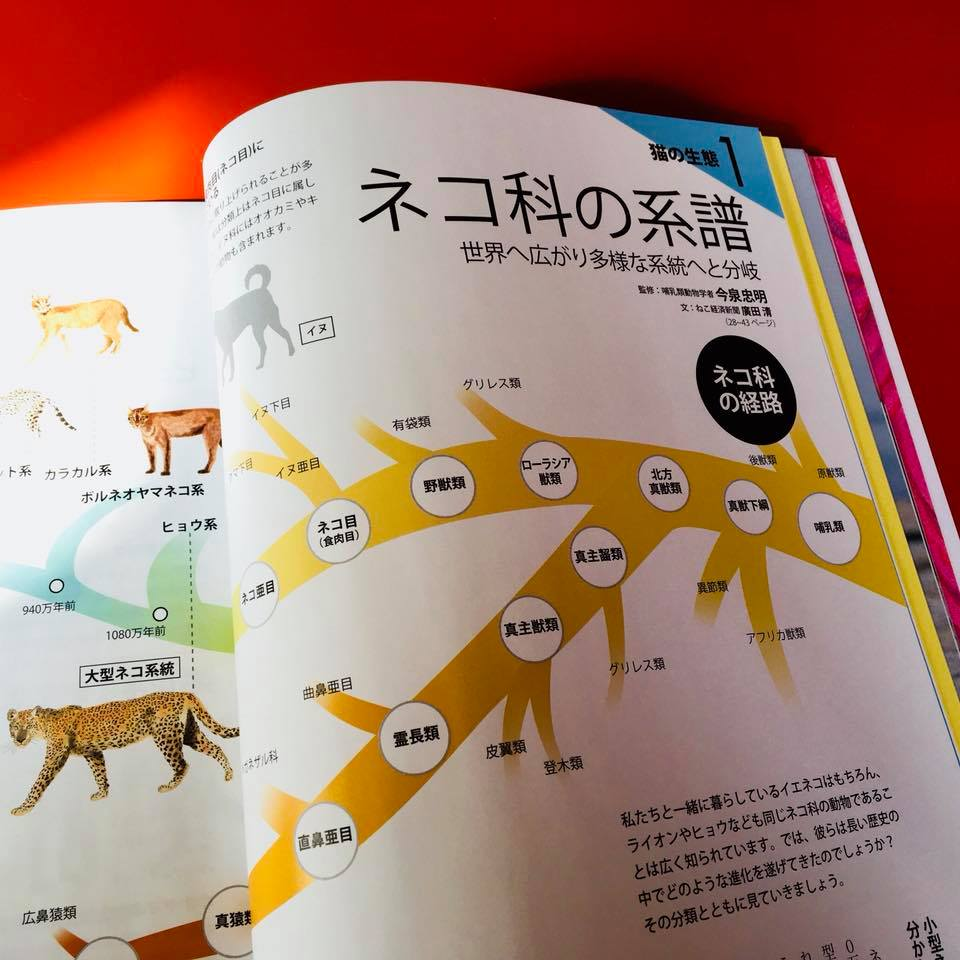 『ねこ検定公式ガイドBOOK』紹介6