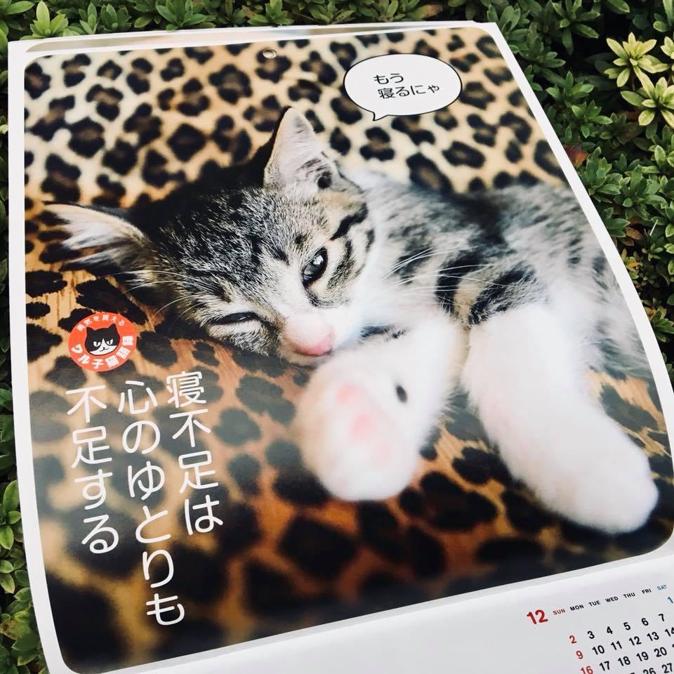 『ワル子猫カレンダーmook2018年版』全貌を公開!6