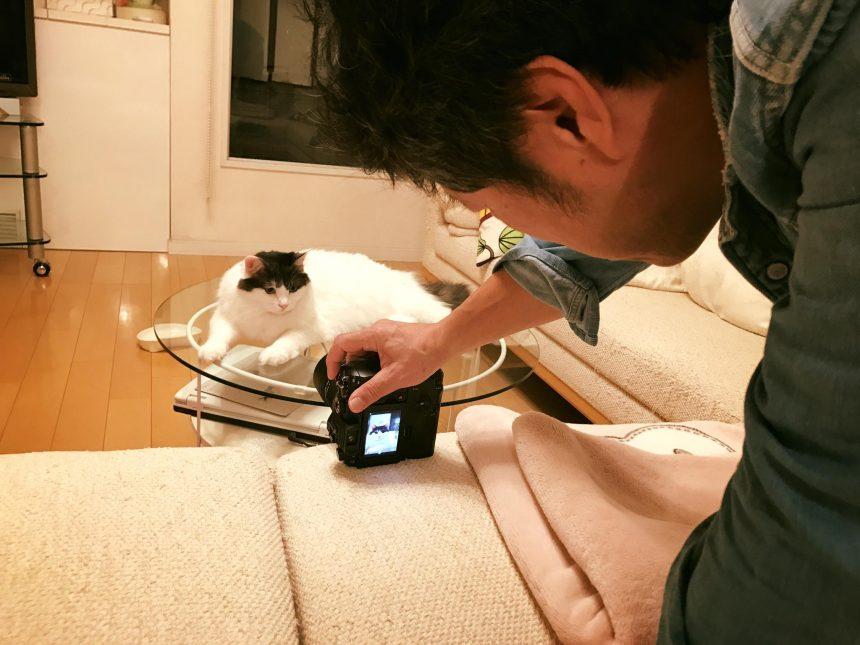 香取家の猫々9