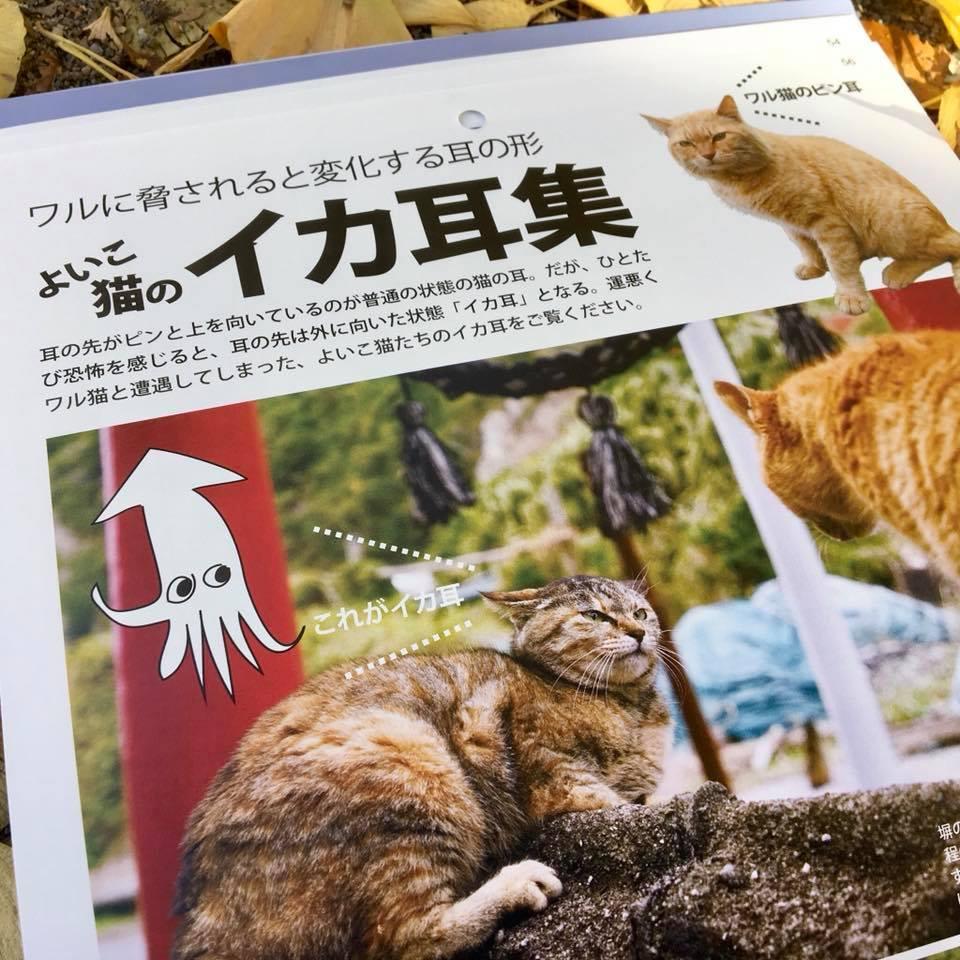ワル猫カレンダーmook2018年版の全貌を公開7