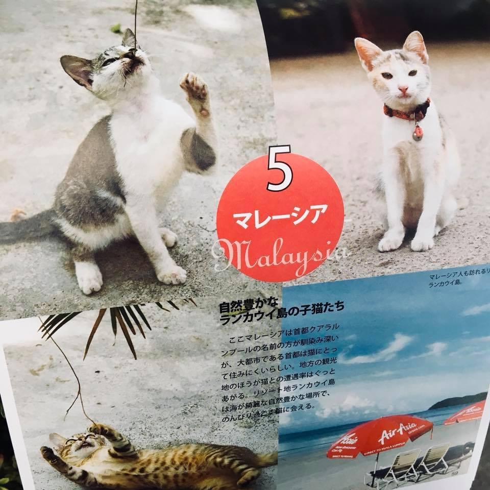『ワル子猫カレンダーmook2018年版』全貌を公開!7