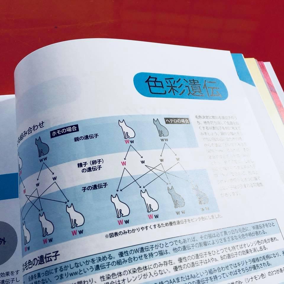 『ねこ検定公式ガイドBOOK』紹介8