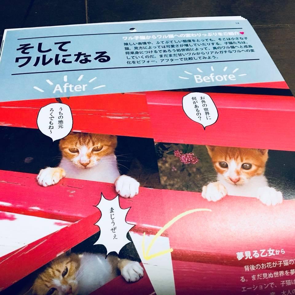 『ワル子猫カレンダーmook2018年版』全貌を公開!8