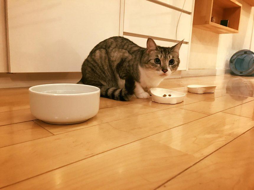 香取家の猫々10