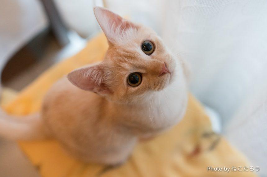 2代目猫店長_イベントに初登場!8