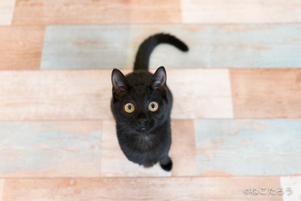 保護猫写真家ねこたろう_びっくりお目々のクロネコ1