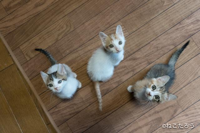 ねこたろう_仔猫の体重測定1
