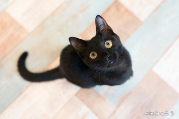保護猫写真家ねこたろう_びっくりお目々のクロネコ2