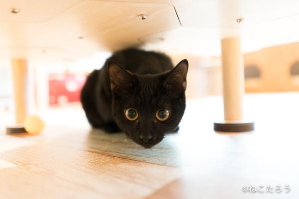 保護猫写真家ねこたろう_びっくりお目々のクロネコ3