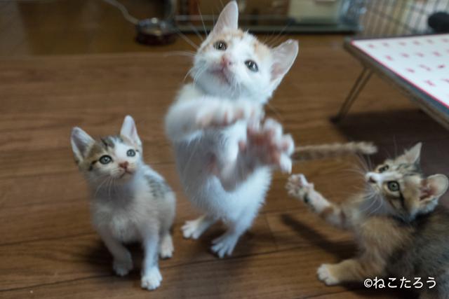 ねこたろう_仔猫の体重測定3