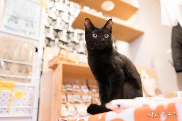 保護猫写真家ねこたろう_びっくりお目々のクロネコ4